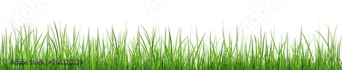 Tuinposter Gras A bunch of green grass isolated on white background