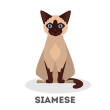 Siamese Cat. Beautiful Animal ...