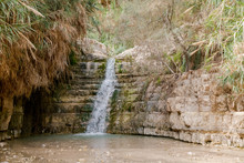 The Waterfall In National Park Ein Gedi