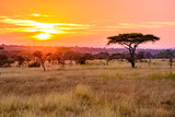 Zachód słońca w afrykańskiej sawannie z drzewami akacji, Safari w Serengeti w Tanzanii