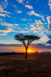 canvas print picture - Sunset in savannah of Africa with acacia trees, Safari in Serengeti of Tanzania
