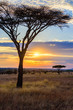 canvas print picture Sunset in savannah of Africa with acacia trees, Safari in Serengeti of Tanzania
