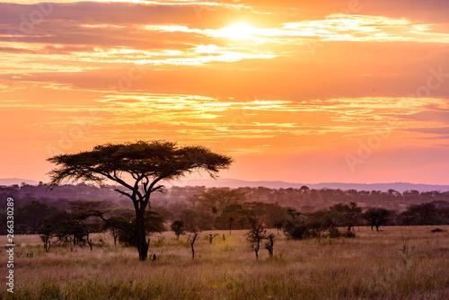 Foto op Plexiglas Afrika Sunset in savannah of Africa with acacia trees, Safari in Serengeti of Tanzania