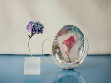 Seashell With Iceflower And Artificial Flowe