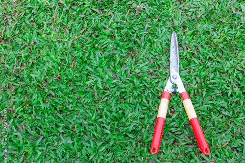 Valokuva  Grass scissors on green grass background