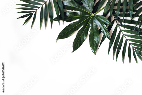 Foto op Aluminium Palm boom Exotic nature styled photo, jungle composition. Green palm and aralia leaves isolated on white table background. Tropical summer holiday, vacation concept. Flat lay, top view. Floral frame, web banner