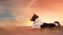 Dog In Sunset