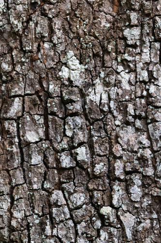 Photo sur Toile Les Textures Close-Up view of tree trunk texture