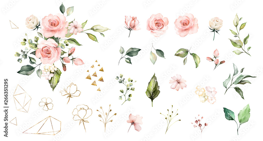 Fototapety, obrazy: Set watercolor elements of roses collection garden  pink flowers, leaves, branches, Botanic  illustration isolated on white background.