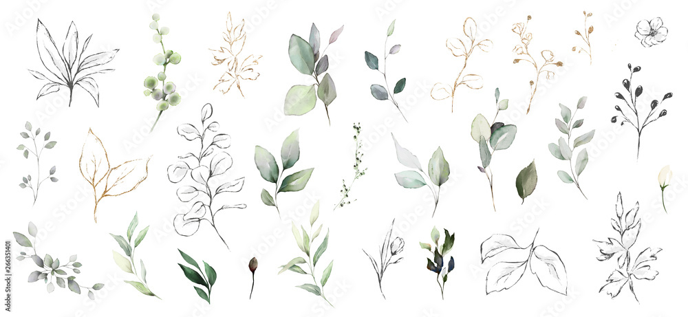 Fototapety, obrazy: Set watercolor herbal elements. collection garden leaves, branches, Botanic  illustration isolated on white background.