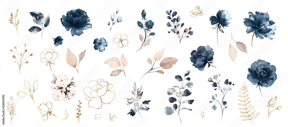 Fototapety, obrazy: Set watercolor design elements of roses collection garden navy blue flowers, leaves, gold branches, Botanic  illustration isolated on white background.