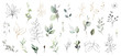 Leinwandbild Motiv Set watercolor herbal elements. collection garden leaves, branches, Botanic  illustration isolated on white background.