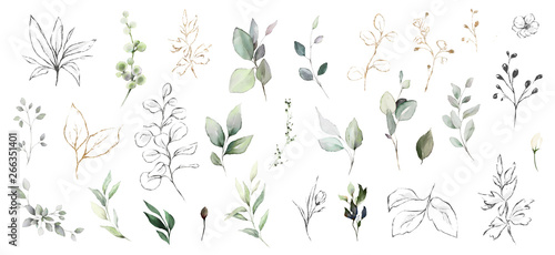 Set watercolor herbal elements. collection garden leaves, branches, Botanic illustration isolated on white background.