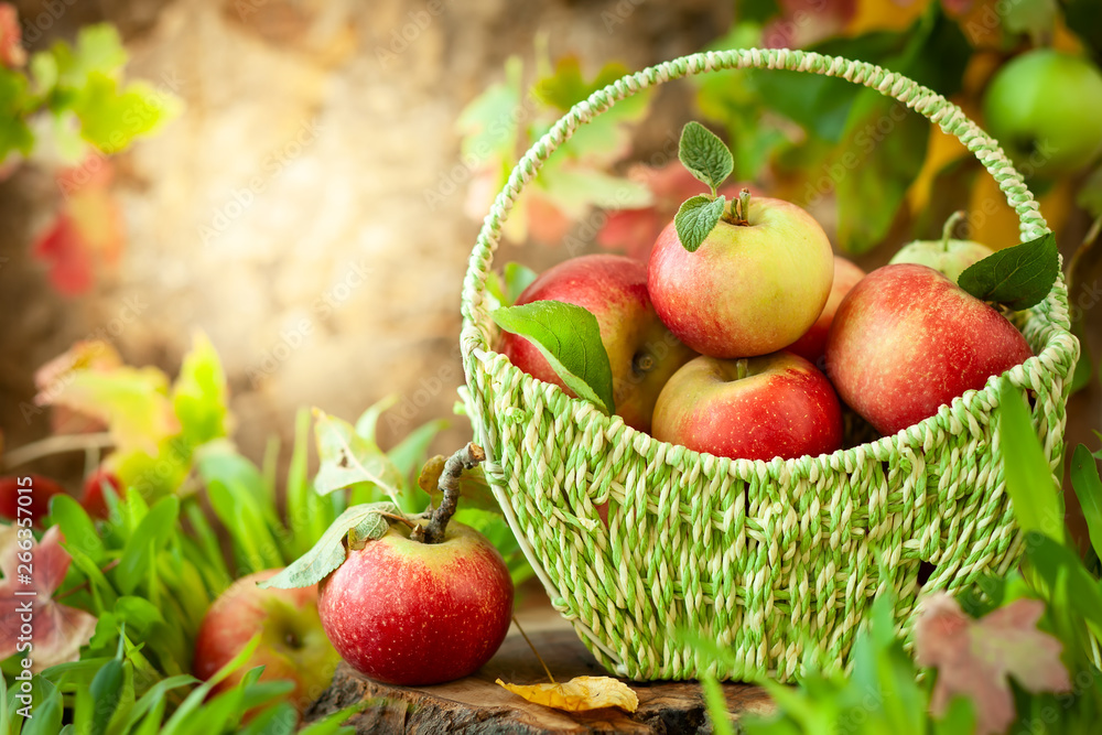 Fototapety, obrazy: Fresh apples in basket
