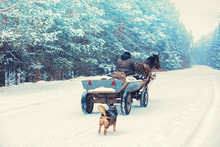 A Man Rides A Horse-drawn Carriage (in Russian A Cart) Along A Snowy Road In Winter. The Dog Follows The Cart