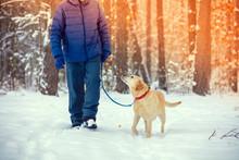 A Man With A Labrador Retriever Dog On A Leash Walks In A Snowy Winter Pine Forest