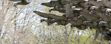 Pigeons Iron Statue