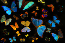 Beautiful Butterflies Collecti...