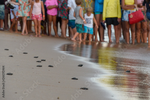 Vászonkép  People observing baby turtles on Tamar project at Praia do Forte in Brazil