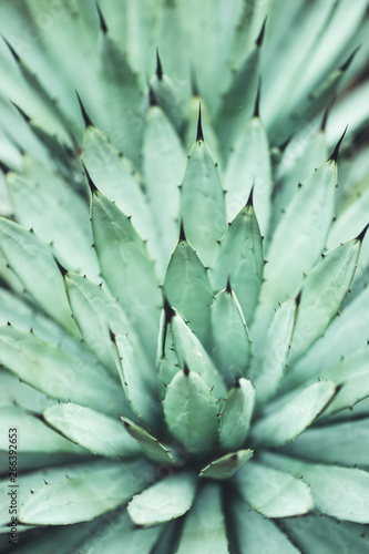 Foto-Leinwand ohne Rahmen - nature poster. succulent (von Marina Vilesova)
