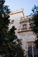 Tangerine Tree In The Center Of Valencia, Spain.