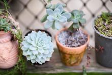 Beautiful Succulent Plants Potted In Clay Pots In Garden Corner