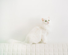Cute Cat Sitting At White Wall