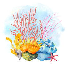 Sea Sponge, Anemone, Starfish,...