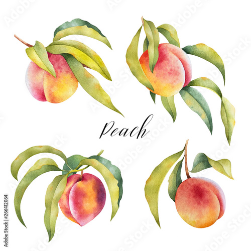 Hand drawn illustration of peaches on a branch with leaves. Set of watercolor isolated farm fresh fruit. Wall mural