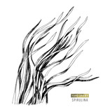 Hand drawn spirulina seaweed - 266415207