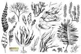 Hand drawn edible algae - 266417075