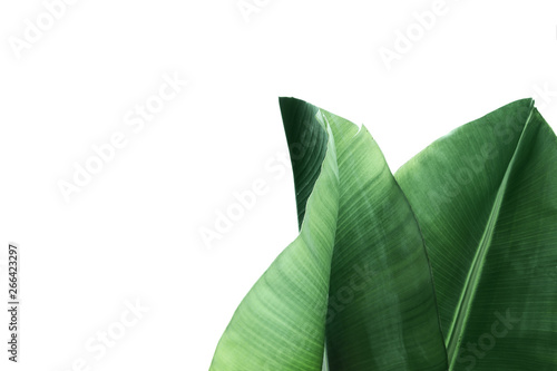 Foto Fresh green banana leaves on white background, top view