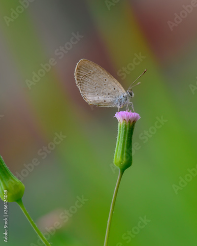 Foto op Aluminium Oranje Beautiful wild colorful butterfly resting on plant. Insect macro.