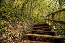 Wood Path In A Forest In Nature For Hiking