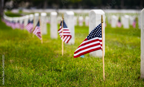 Obraz Small American flags and headstones at National cemetary- Memorial Day display - fototapety do salonu