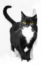 Funny Cats Making Silly Expressions In Black And White And Gray.