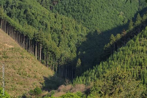 Tuinposter Wijngaard 杉の木が植林された山