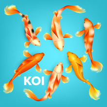 Different Colors Of Koi Exotic...