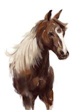Horse Hand Drawn Illustration,art Design