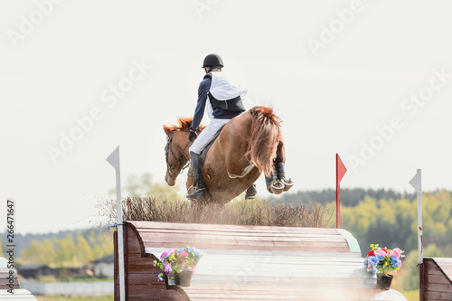 Fotografering horse jumping during horse eventing cross-country in the morning in spring