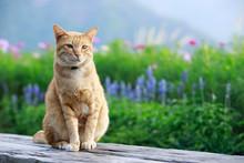 Portrait Of A Cat Outdoors Wit...