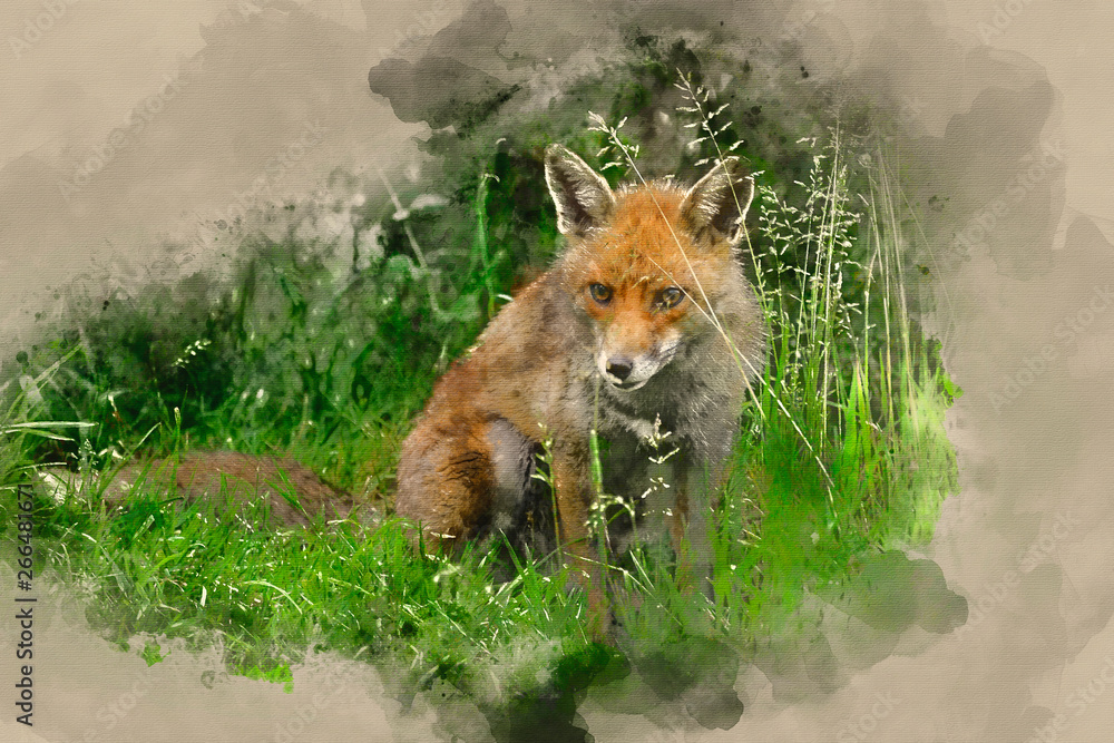 Fototapety, obrazy: watercolor painting of Stunning male fox in long lush green grass of Summer field
