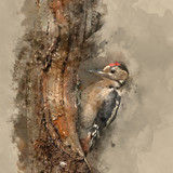 watercolor painting of Beautiful Great Spotted Woodpecker bird Dendrocopos Major on tree stump in woodland landscape setting - 266481890