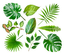 Collage Of Different Exotic Plant Leaves Isolated On White Background