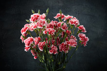Carnation Flowers Bouquet Over Dark Moody Art Background