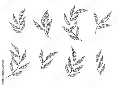 Fotografía  designer elements set collection of greeng leaves herbs