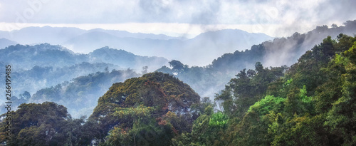Fotografie, Obraz Tropical rainforest of Nyungwe National Park,Rwanda