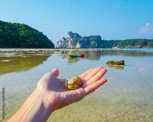 Valokuva  mano con granchio tailandia oceano