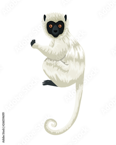 tropical capuchin monkey character Tablou Canvas