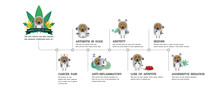 Your Dog Benefits Cbd Of Effect Your Dog Receptors Pet, Vector Infographic On White Background
